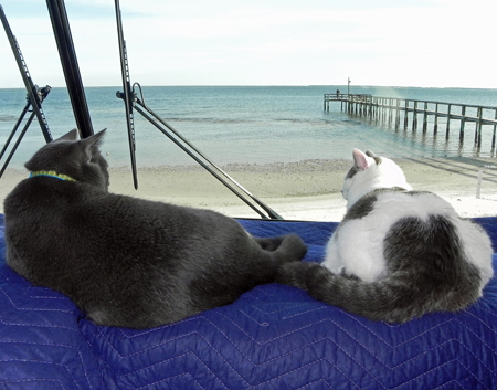 Smokey and Oreo love the view on lot 44!