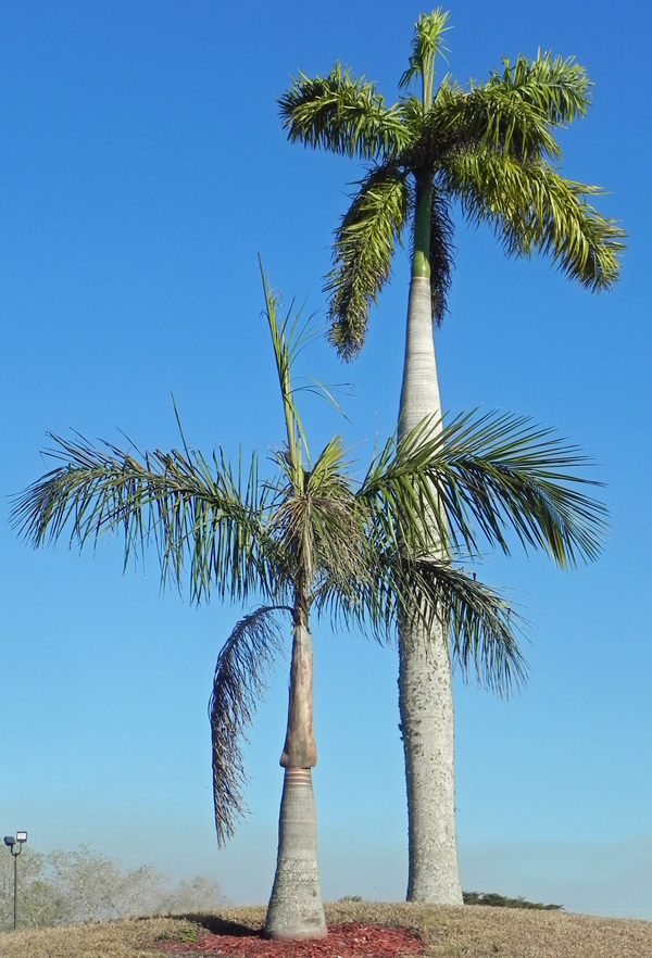 Beautiful Palms through out the park!